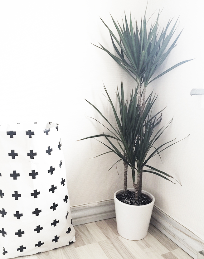 dracaena_marginata_blondiemoments